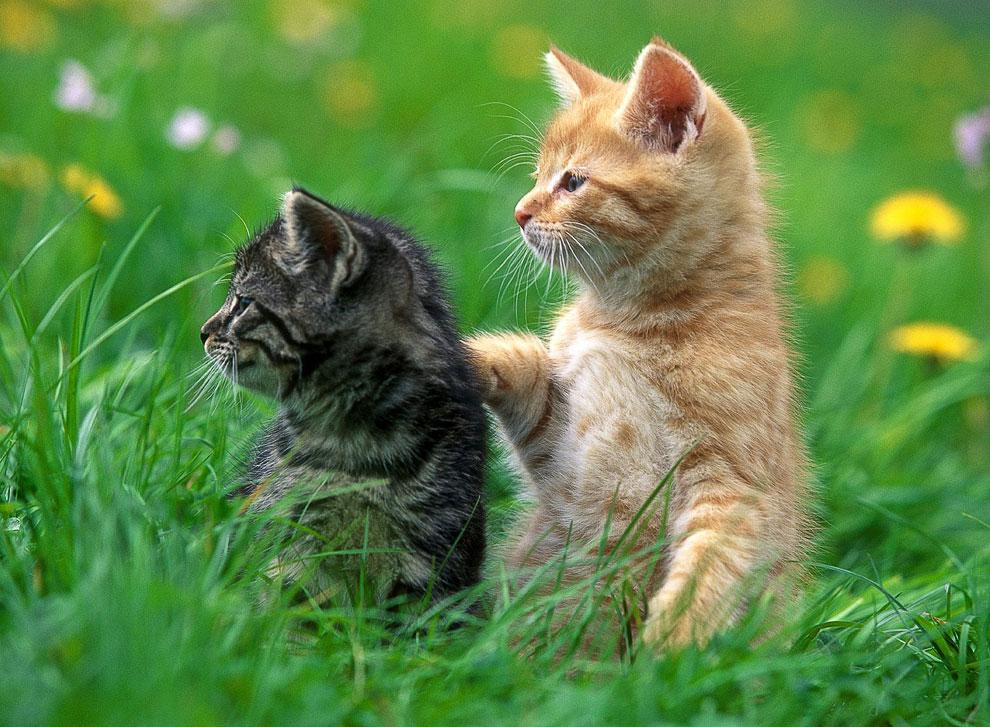 У собак есть хозяева. У кошек — обслуживающий персонал.