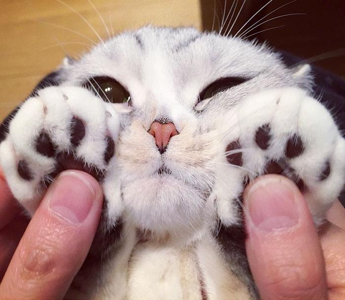 Фото обворожительной кошки с огромными глазами (14 фото)