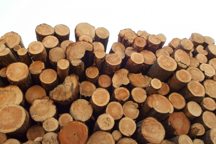 Бурятская таможня пресекла нелегальный экспорт леса на78 млн руб.