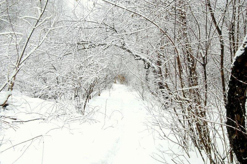 Тропка в снегу.