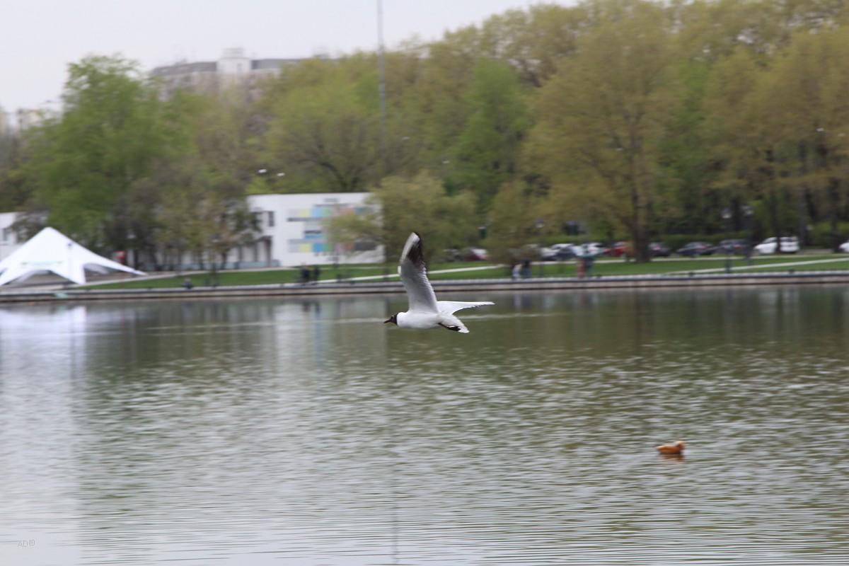 Москва - СВАО