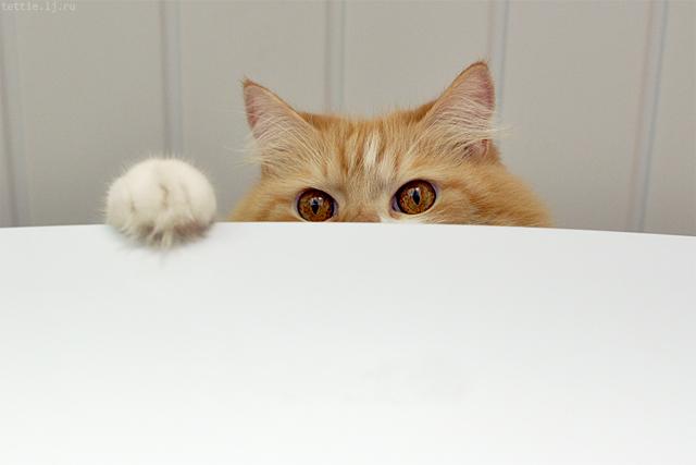 Мой кот спрятался на холодильнике