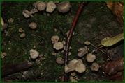 http://img-fotki.yandex.ru/get/25939/15842935.37d/0_eab5a_bd8ffc37_orig.jpg