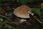 http://img-fotki.yandex.ru/get/25939/15842935.380/0_eabea_af8376a2_orig.jpg