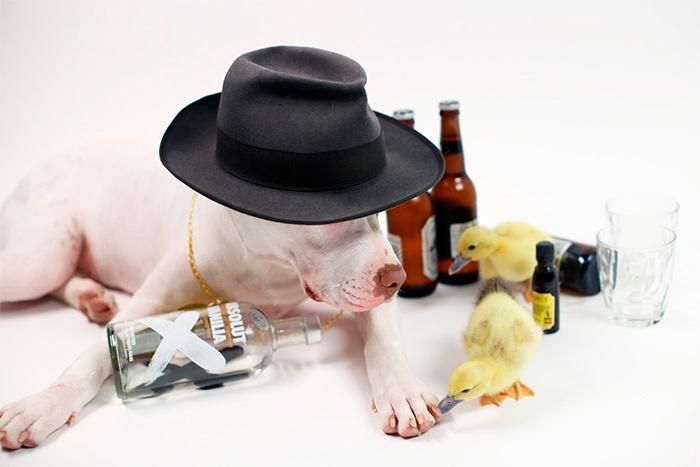 пес и уточки