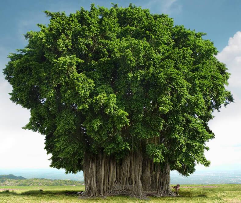 Люди, родившиеся под покровительством дерева, очень щедры. Они твердо придерживаются своих при