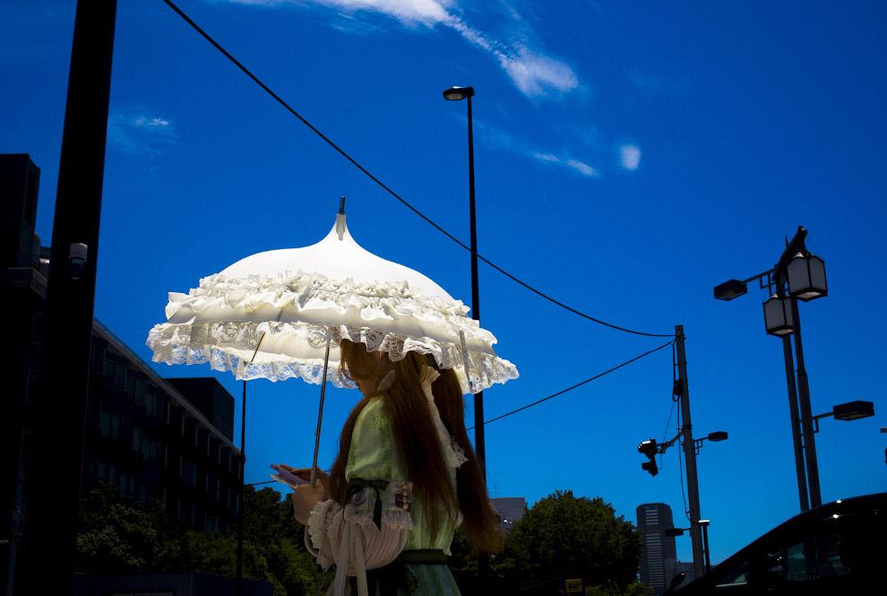 3. Подсолнухи в Германии, 17 июля 2015. Также смотрите « История подсолнечника — цветка солнца