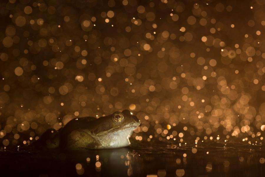 17. Категория «Фотографы в возрасте 12 до 18 лет». Лягушка. Лоустофт, Суффолк, Англия. Фотограф: Kyl