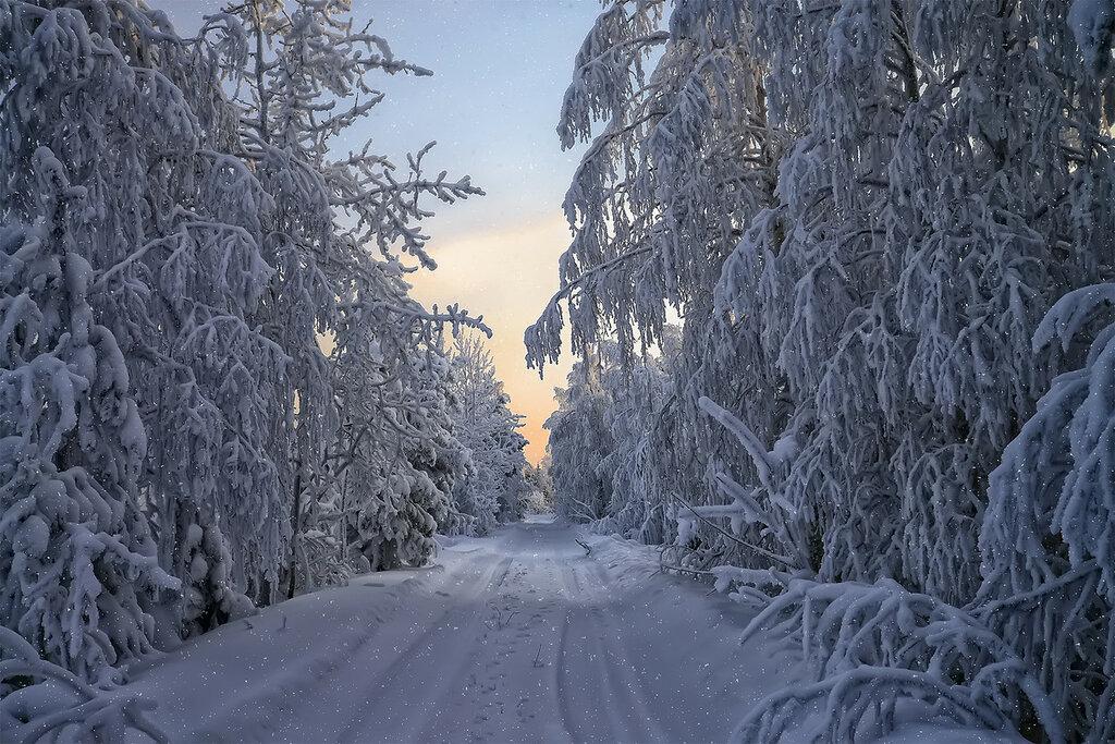 Дорогой зимнею