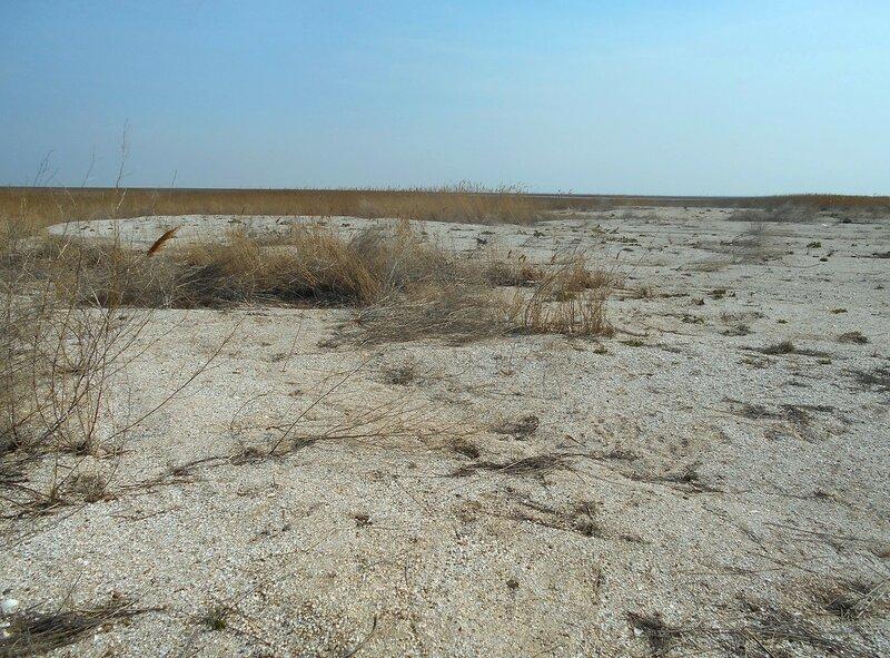 Дали песчано-камышовые ... DSCN1722.JPG