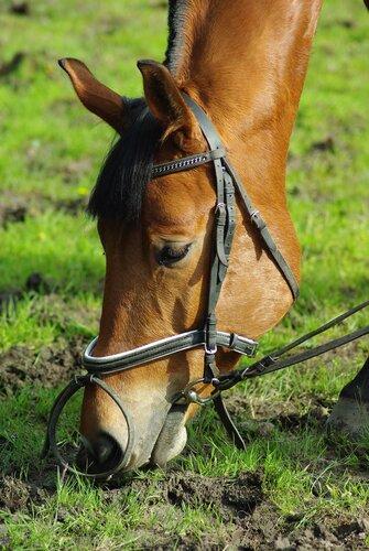 лошади удельного парка