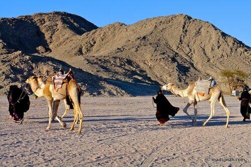 египет, бедуины