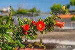 Самые запоминающиеся фото Крита. Весна 2017