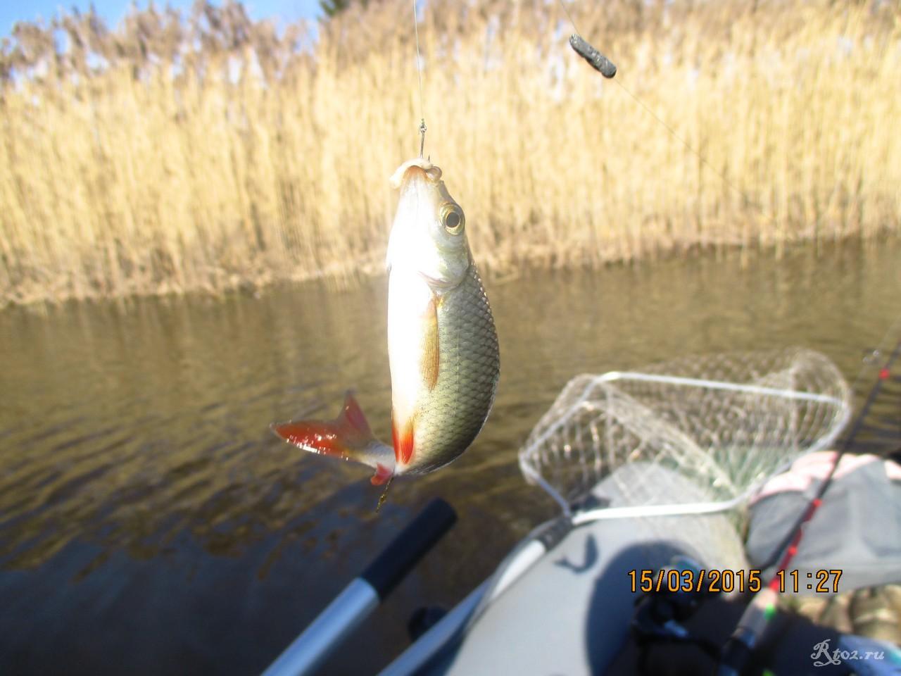 летняя рыбная ловля  нате десногорском водохранилище