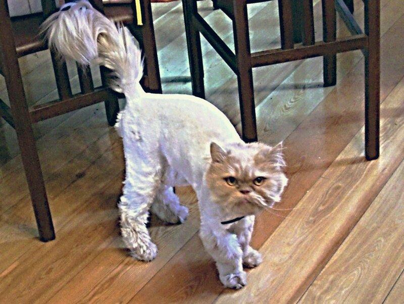 Как подстричь кота в домашних условиях самому 353