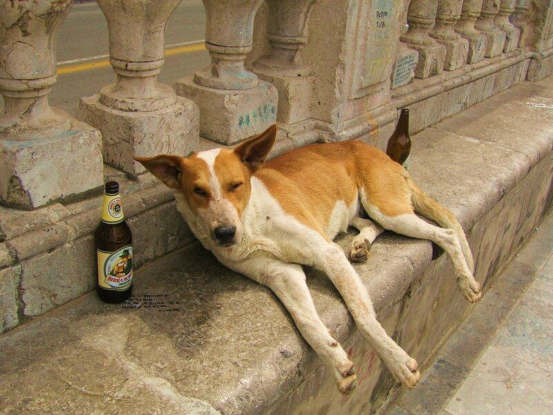 Пиво в жару лучше не пить