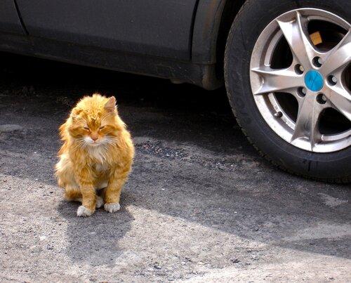 Год Дракона — «Зеленоградский бойцовский кот.» на Яндекс.Фотках
