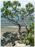 Titlow Beach Park (Tacoma) 14