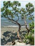 Titlow Beach Park (Tacoma) 14