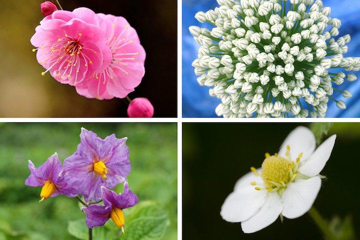 Как цветут разные овощи и фрукты