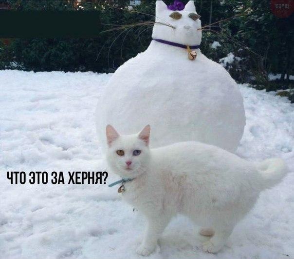 Прикольное фото злого кота и кота-снеговика