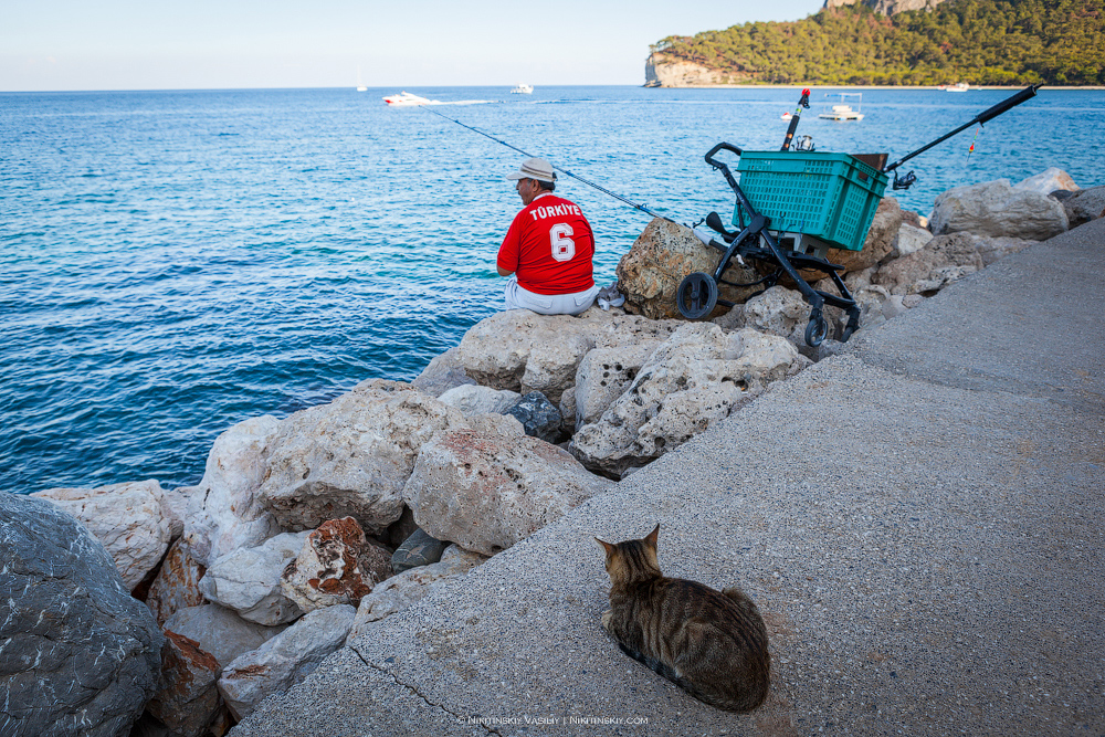 Турецкие киски любых, поджарые, фотографий, Данный, сайте, игривое, Настроение, простите, юморок, материал, является, права, опубликован, авторского, объектом, повкуснее, изначально, рыбёшку, подсечках, доброго
