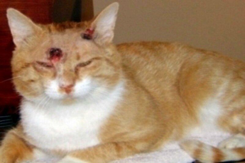Сколько времени кошка может выдержать в стиральной машине? А сколько выстрелов?