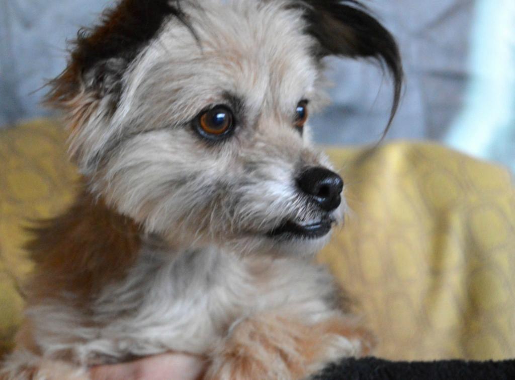 Филиппок собака из догпорта