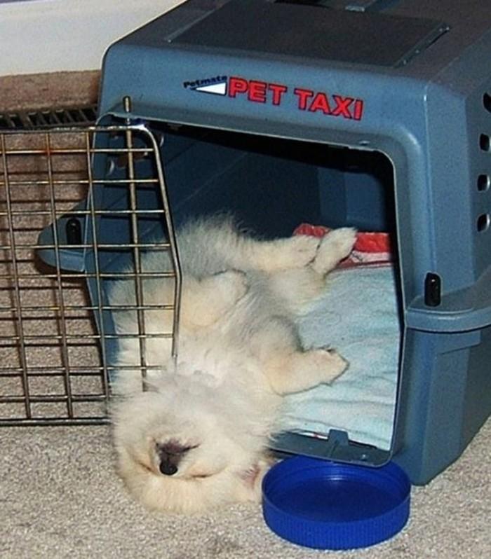 Спят усталые щеночки, в миске спят
