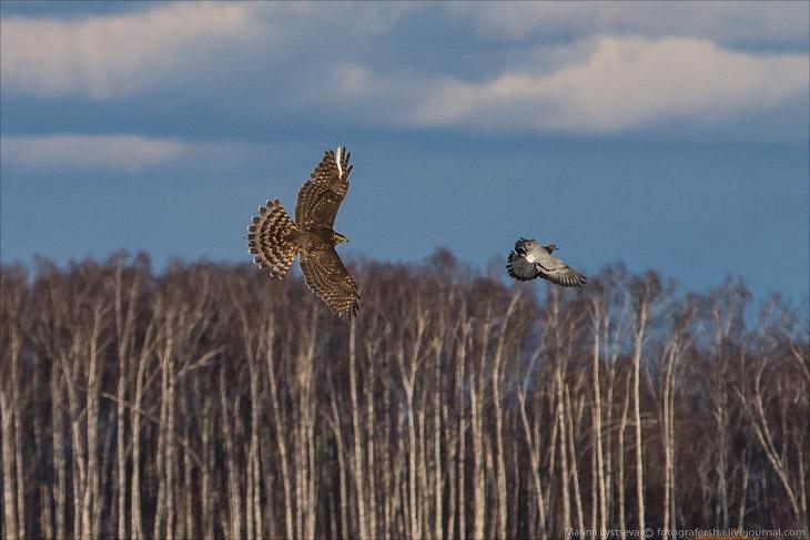 2. По опасности, которую могут представлять пернатые для воздушных судов, птицы делятся по весу и ра