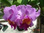 Цветок в Тайланде..jpg