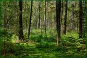 http://img-fotki.yandex.ru/get/26036/15842935.383/0_ead97_7ad4a65f_orig.jpg