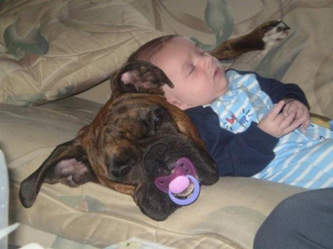 Лучшая подушка— домашняя зверушка.