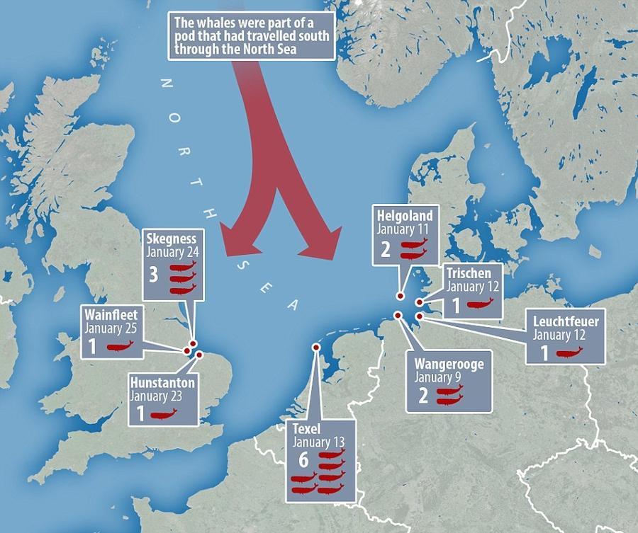 8. Есть предположение, что кашалоты заплыли в Северное море со стороны Норвегии. Однако, остаётся не