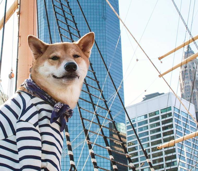 Images © Menswear Dog