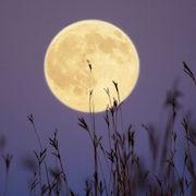 лавандовая луна