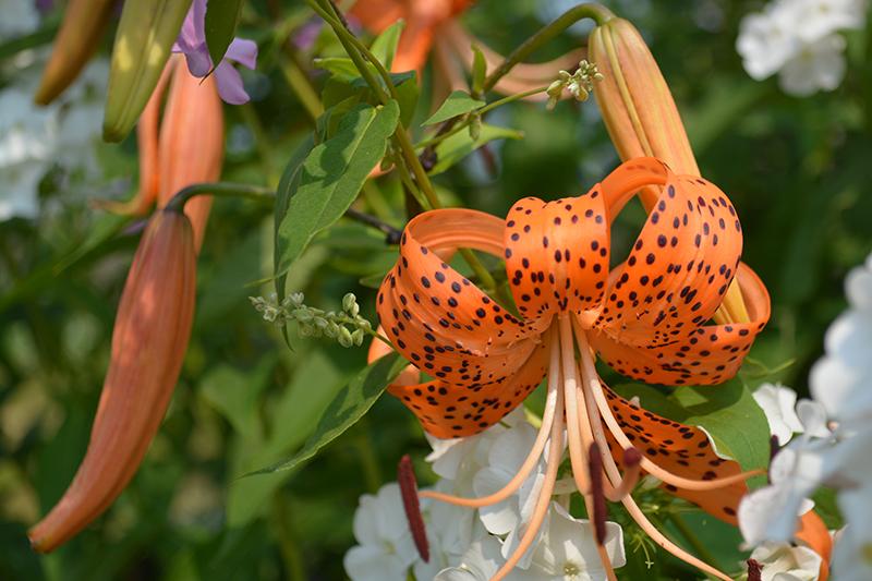цветочное 3 16.jpg