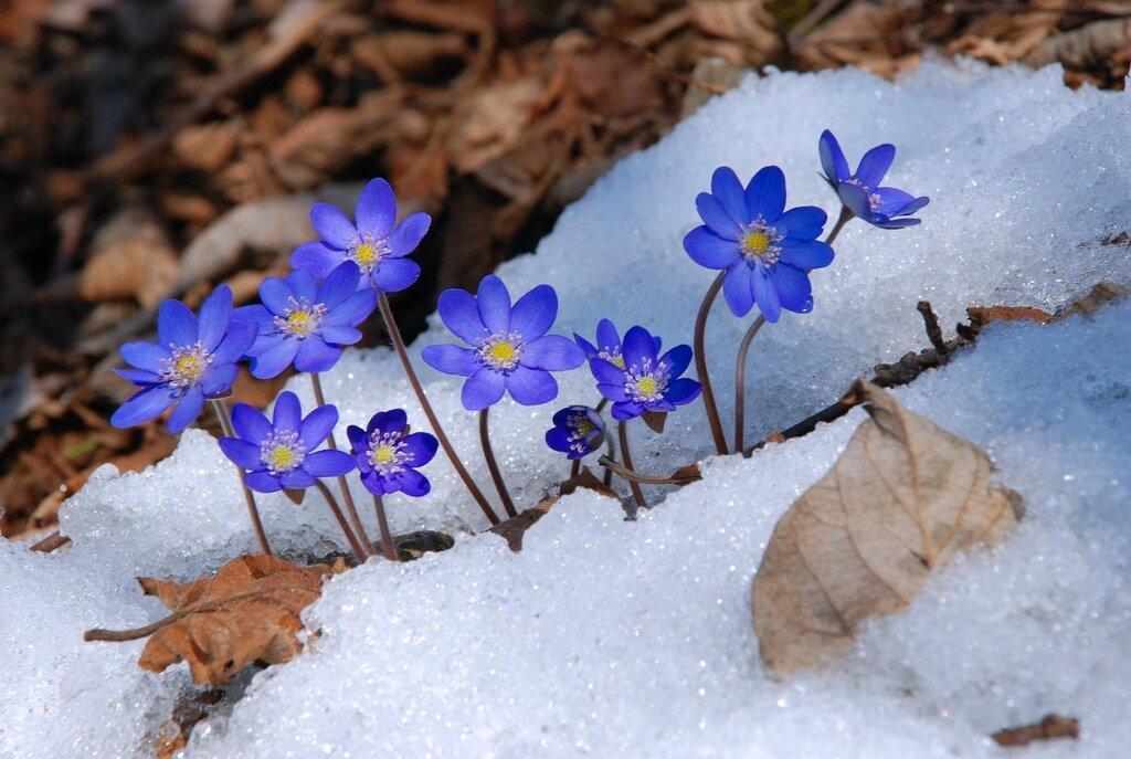 Опять весна на белом свете.