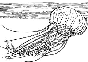 Морская тематика (раскраски)