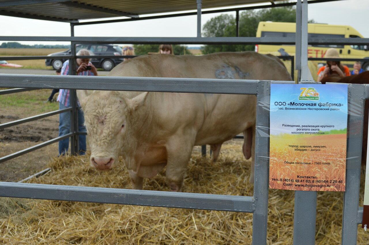 Мясные породы коров. КРС мясного направления