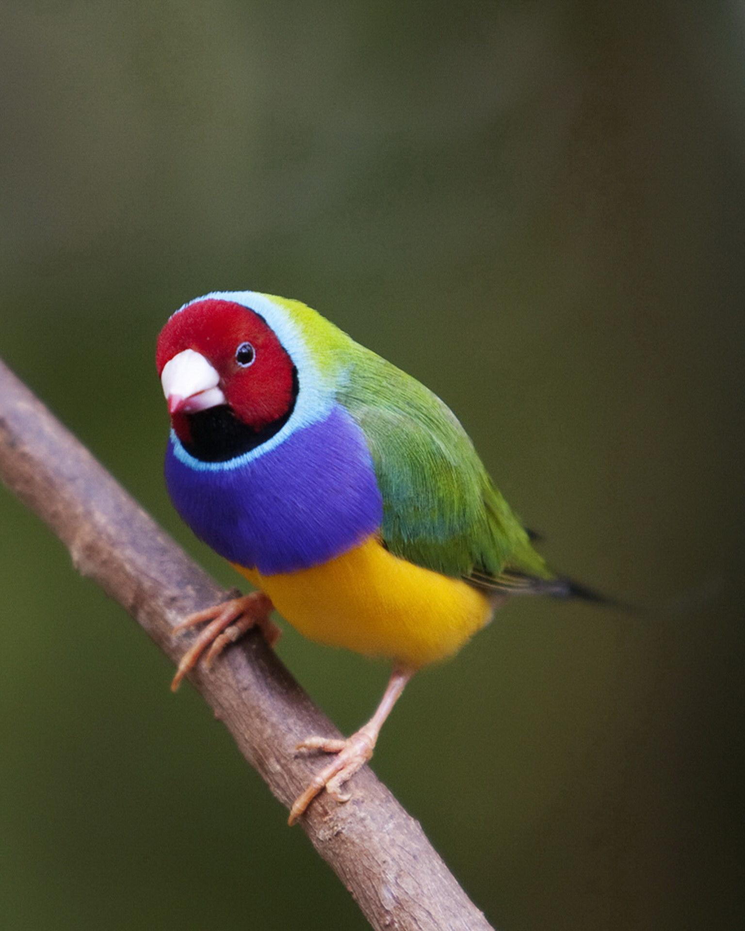 Райдужна птиця