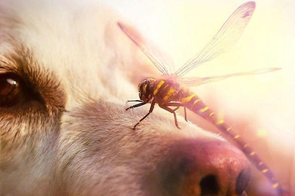 Фотограф Габи Штиклер охотно пользуется терпимостью и выдержкой своего пса.