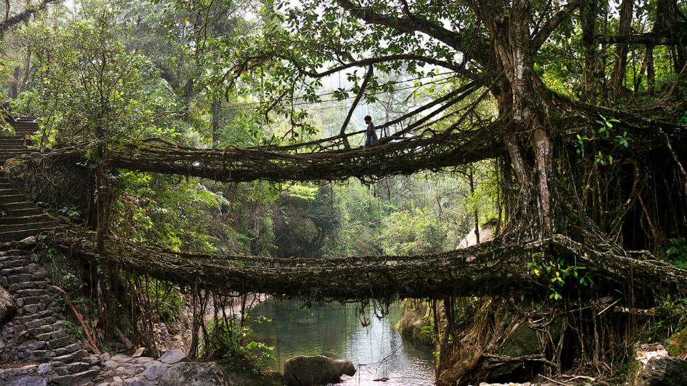 Там Где Дождь Круглый Год: Мегхалая — Самое Влажное Место на Земле