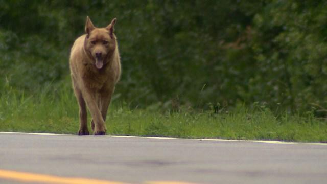 Ларри же приходится объяснять, что нужно отпустить пса, он вполне способен найти дорогу домой сам.