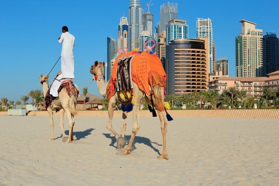 7. Так как в ОАЭ верблюды являются символом высокого статуса, в правилах дорожного движения этой стр
