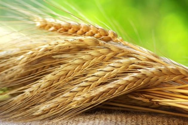 Аграрии Луганской области намолотили неменее 1 млн тонн зерна