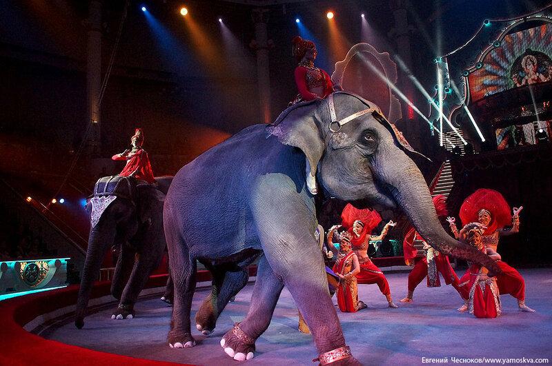 Осень. Цирк. Корниловы. слоны. 02.09.16.15..jpg