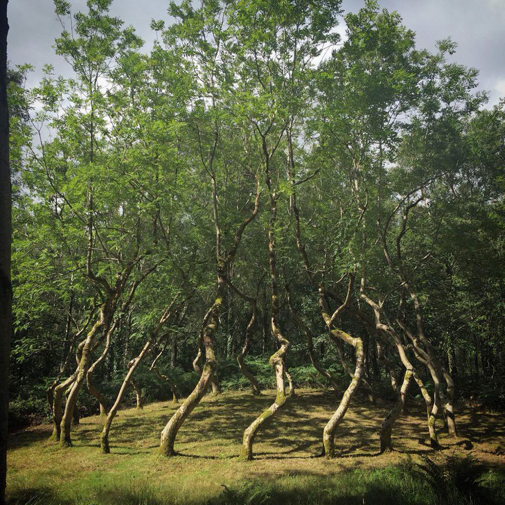 Ash Dome: A Secret Tree Artwork in Wales Planted by David Nash in 1977 (3 pics)