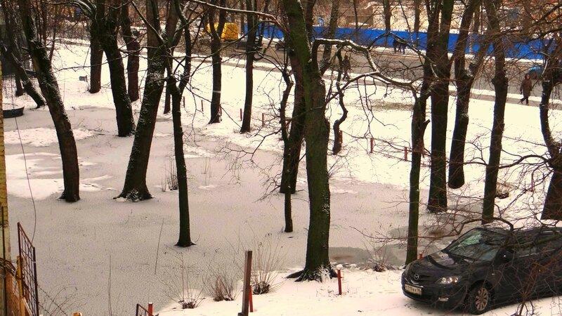 городской зимний лес