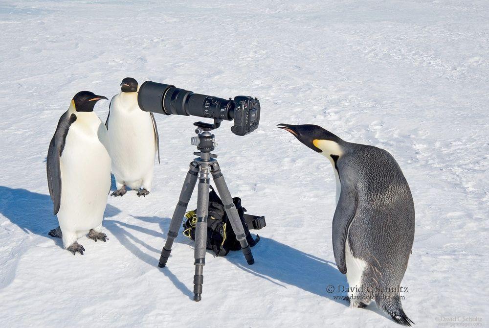 8. Мы ведем прямой репортаж из Антарктики, и здесь холодно, я вам скажу. (© David C. Schultz)